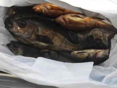 釣具の海友の2021年3月15日(月)2枚目の写真
