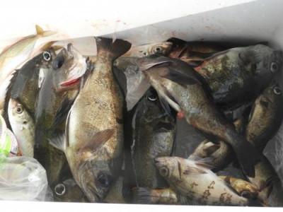 釣具の海友の2021年3月15日(月)3枚目の写真