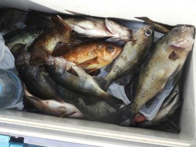 釣具の海友の2021年3月15日(月)5枚目の写真