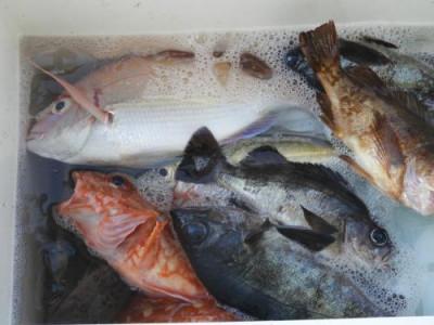 釣具の海友の2021年3月18日(木)2枚目の写真