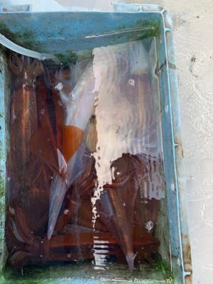 松大丸の2021年3月23日(火)1枚目の写真