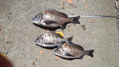 河村渡船の2021年3月24日(水)1枚目の写真