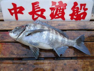 中長渡船の2021年3月26日(金)3枚目の写真