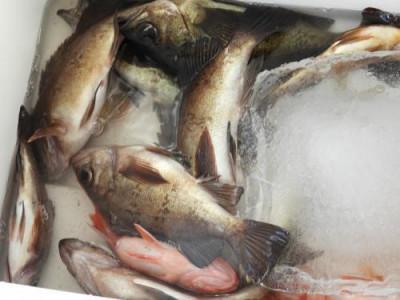 釣具の海友の2021年3月26日(金)3枚目の写真