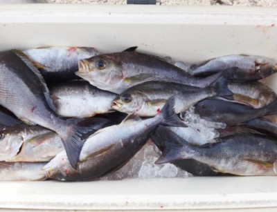 丸銀釣りセンターの2021年3月26日(金)2枚目の写真