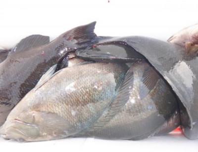 丸銀釣りセンターの2021年3月26日(金)3枚目の写真