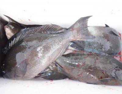丸銀釣りセンターの2021年3月26日(金)4枚目の写真