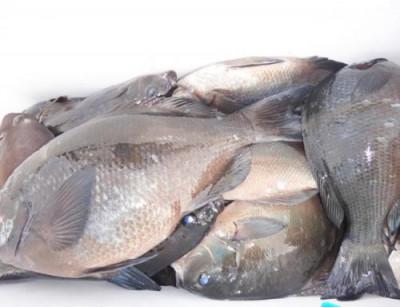 丸銀釣りセンターの2021年3月26日(金)5枚目の写真