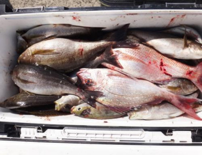 丸銀釣りセンターの2021年3月25日(木)1枚目の写真