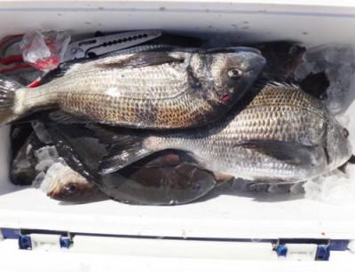 丸銀釣りセンターの2021年3月25日(木)2枚目の写真