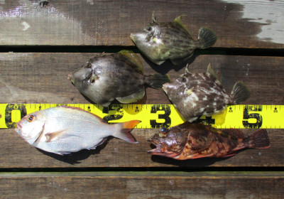 岩崎レンタルボート(岩崎つり具店)の2021年4月3日(土)4枚目の写真