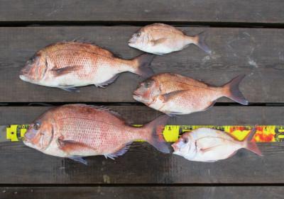 岩崎レンタルボート(岩崎つり具店)の2021年4月4日(日)3枚目の写真