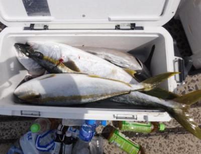 丸銀釣りセンターの2021年3月31日(水)1枚目の写真