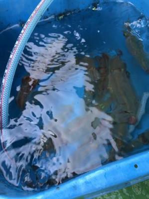翔太丸の2021年4月7日(水)2枚目の写真