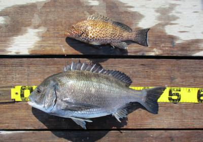 岩崎レンタルボート(岩崎つり具店)の2021年4月7日(水)3枚目の写真