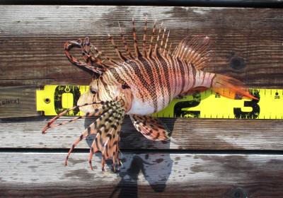 岩崎レンタルボート(岩崎つり具店)の2021年4月7日(水)4枚目の写真