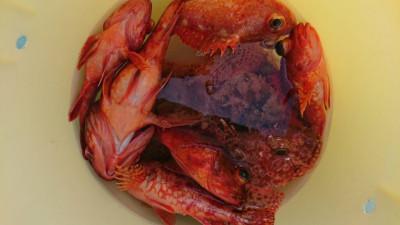 北山丸の2021年4月7日(水)4枚目の写真