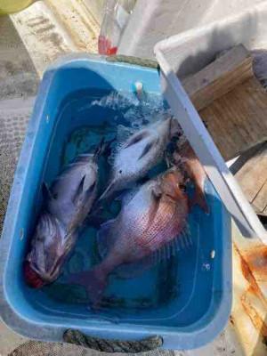 龍宮丸の2021年4月7日(水)1枚目の写真