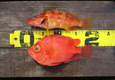 岩崎レンタルボート(岩崎つり具店)の2021年4月9日(金)3枚目の写真