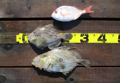 岩崎レンタルボート(岩崎つり具店)の2021年4月10日(土)3枚目の写真