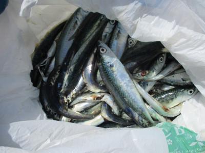 岩崎レンタルボート(岩崎つり具店)の2021年4月10日(土)4枚目の写真