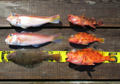 岩崎レンタルボート(岩崎つり具店)の2021年4月10日(土)5枚目の写真