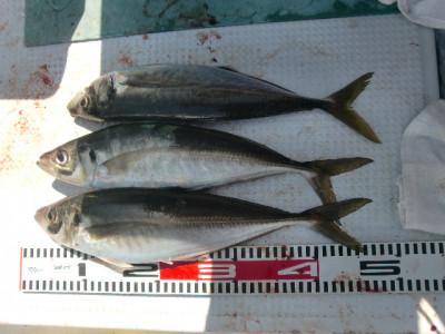 釣り船 みらいの2021年4月11日(日)1枚目の写真