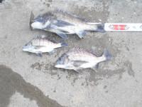 野村渡船の2021年4月12日(月)3枚目の写真
