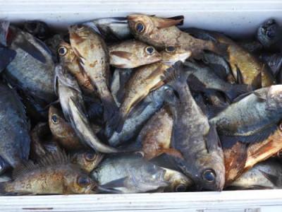釣具の海友の2021年4月10日(土)2枚目の写真