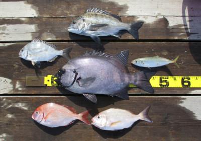 岩崎レンタルボート(岩崎つり具店)の2021年4月14日(水)2枚目の写真