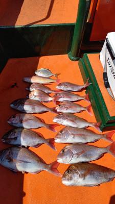 清家渡船の2021年4月15日(木)3枚目の写真