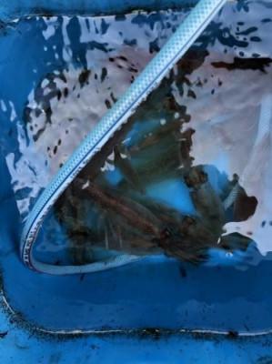 翔太丸の2021年4月15日(木)2枚目の写真
