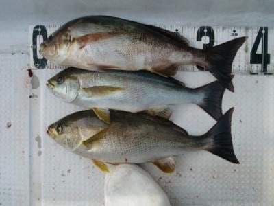 釣り船 みらいの2021年4月15日(木)3枚目の写真