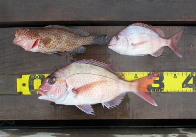 岩崎レンタルボート(岩崎つり具店)の2021年4月16日(金)3枚目の写真