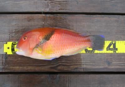 岩崎レンタルボート(岩崎つり具店)の2021年4月17日(土)2枚目の写真