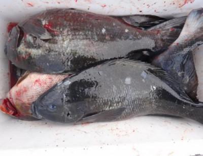 丸銀釣りセンターの2021年4月17日(土)5枚目の写真