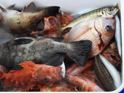釣具の海友の2021年4月16日(金)3枚目の写真
