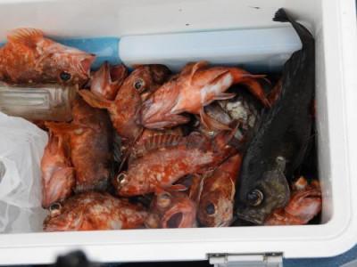 釣具の海友の2021年4月16日(金)5枚目の写真