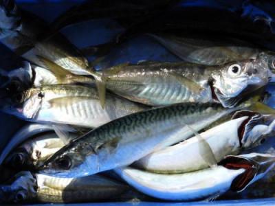 釣具の海友の2021年4月20日(火)3枚目の写真