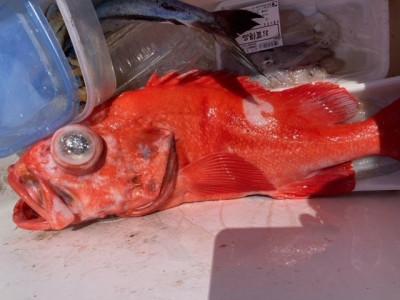 釣り船 黒潮丸の2021年4月21日(水)1枚目の写真