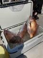 龍宮丸の2021年4月21日(水)2枚目の写真