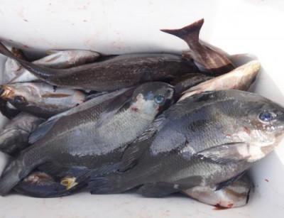 丸銀釣りセンターの2021年4月22日(木)4枚目の写真