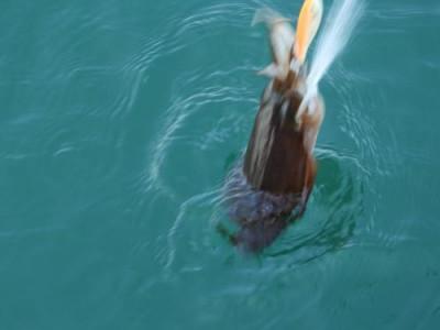 釣具の海友の2021年4月21日(水)3枚目の写真