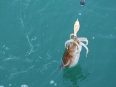 釣具の海友の2021年4月21日(水)4枚目の写真