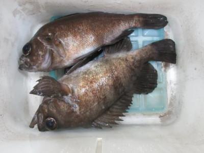 鈴木釣具店の2021年4月24日(土)5枚目の写真