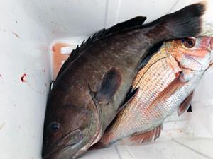 第一大漁丸の2021年4月25日(日)2枚目の写真