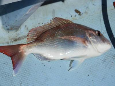 釣具の海友の2021年4月25日(日)2枚目の写真
