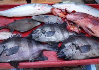 奥村釣船の2021年4月25日(日)5枚目の写真