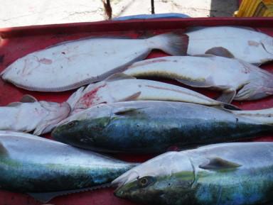 奥村釣船の2021年4月26日(月)4枚目の写真