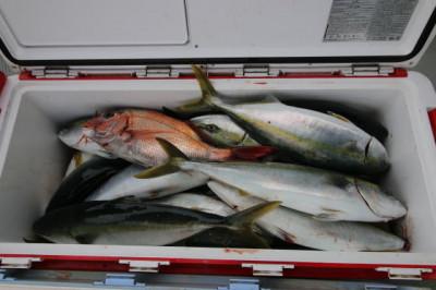 西岡遊漁の2021年4月23日(金)2枚目の写真